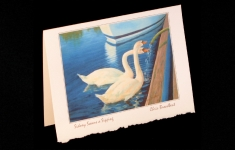Sidney swans a sipping deckle edge art card