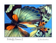 Butterfly Dreams 2 card front