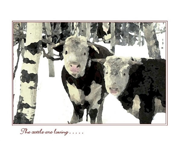 Seasonal Boxed Cards - Snow Grazers - The cattle are lowing . . . .