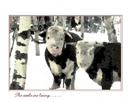 Snow Grazers Christmas card front