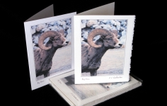 Critters - Big Horn - Art Card