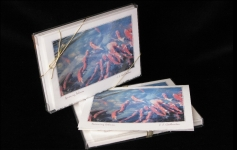 Boxed Art Cards - Spawning Salmon