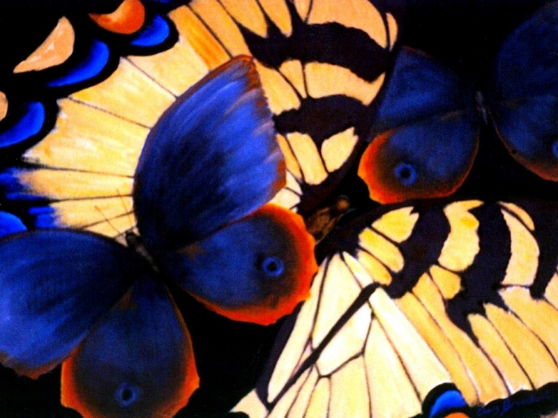 Butterfly Dreams 1